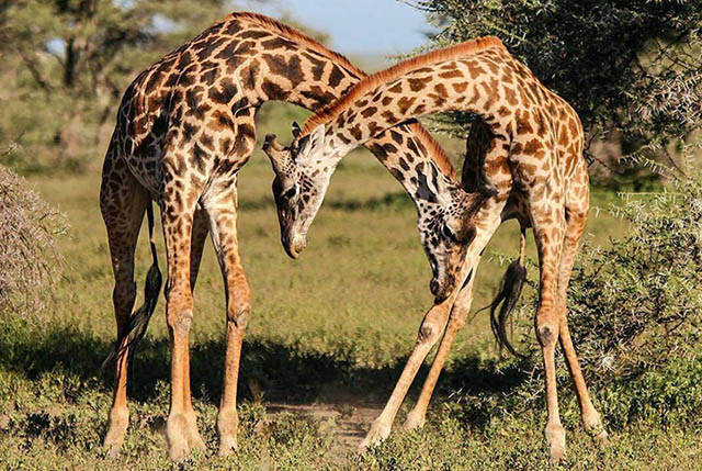 4 Day Safari to Tarangire, Ngorongoro and Serengeti