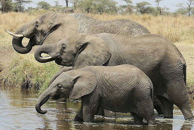 3 Day Safari to Tarangire, Ngororngoro and Lake Manyara